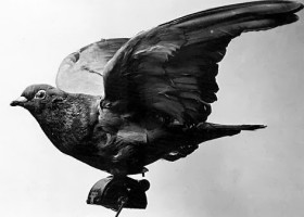HISTORY: Next time you tap an address into your GPS, thank a pigeon. #GISday