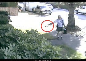 WEIRD: Calif. mayor resigns after caught on video flinging dog poop on neighbor's lawn