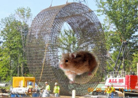 SOURCES: Latest tunnel construction project to be powered by giant hamster wheel. Or not.