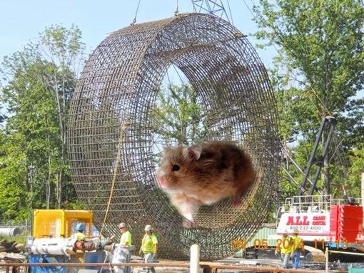 hamster510.jpg
