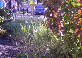 LOOK: See green infrastructure plans taking root in Cleveland neighborhoods