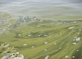 ALGAE: In wake of Toledo's algae woes, investigation takes deeper look at causes, solutions (Video)