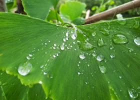 VIDEO: What causes that wonderful after-the-rain smell? Slow-mo video reveals secrets.